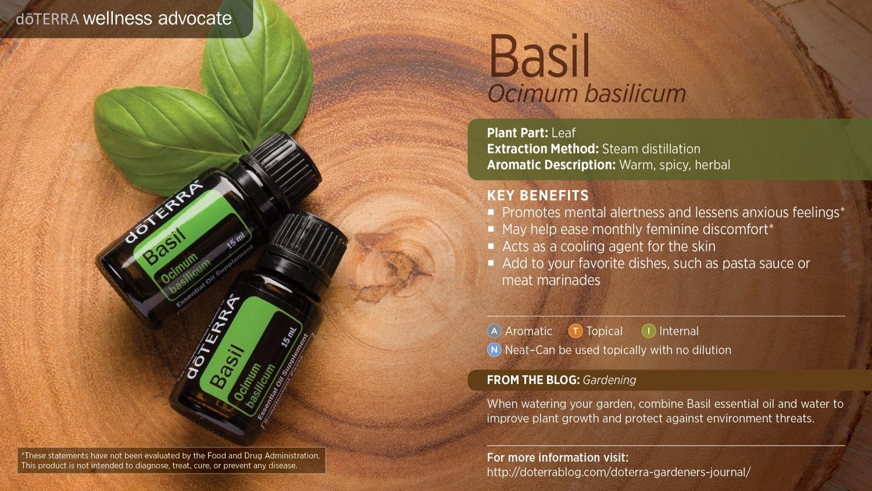 Doterra basil oil