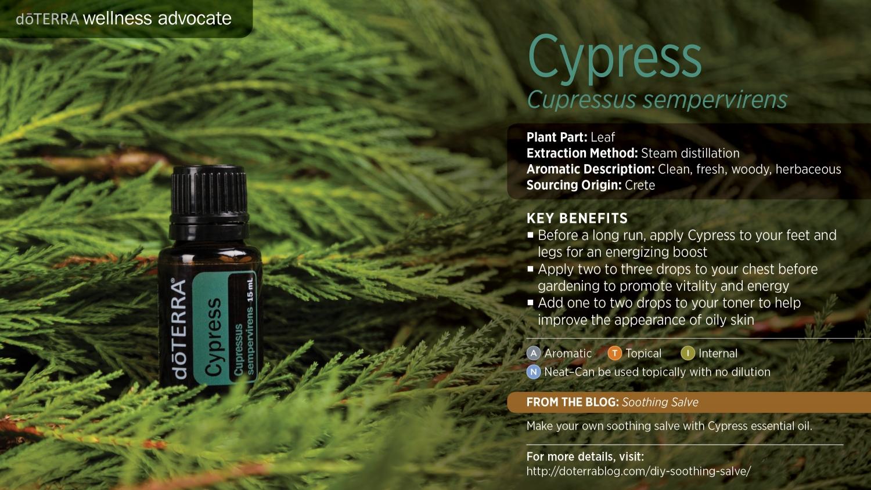 Doterra Cypress