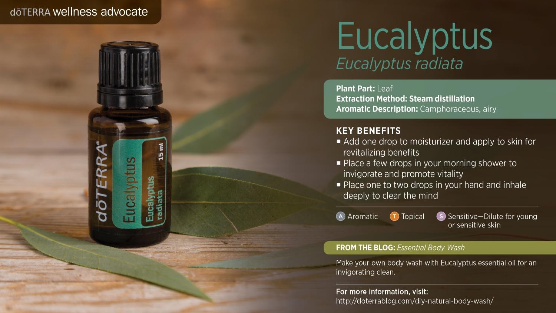 Doterra eucalyptus oil